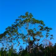 Amazon Village – Jungle Service