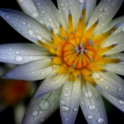 Flowering Presence Cards